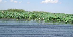 Экоотель Озеро Дивное Сочи Лазаревское